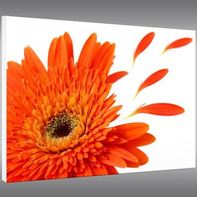 Cuadro Forex floral
