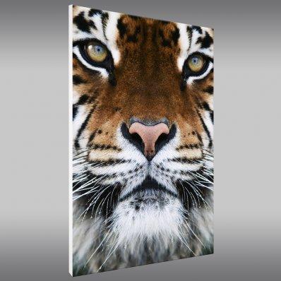 Cuadro Forex Tigre