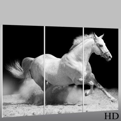 Quadro Forex cavallo