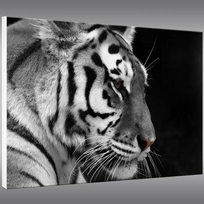 Quadro PVC Forex Tigre