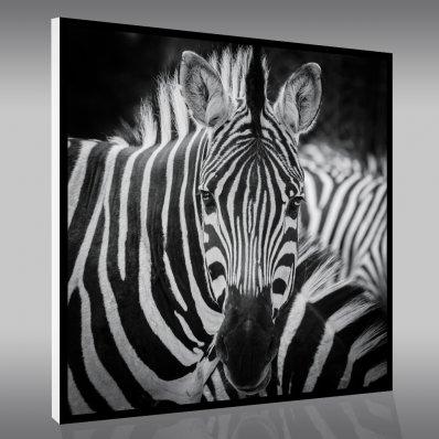 tableaux animaux pas cher stickers folies. Black Bedroom Furniture Sets. Home Design Ideas