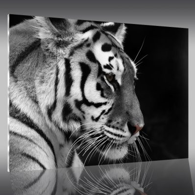Tableau Plexi Tigre