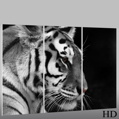 Tablou Forex Tigru
