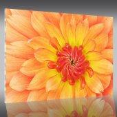 Acrylglasbild Blume