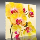 Acrylglasbild Orchideen