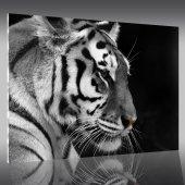 Acrylglasbild Tiger