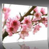 Cuadro metacrilato florals