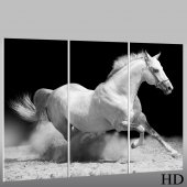 Horse - Triptych Forex Print