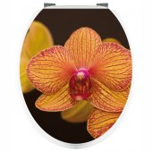 Naklejka na WC - Pomarańczowa Orchidea