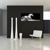 Obraz Forex - Koń