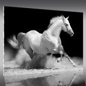 Quadro Acrílico cavalos