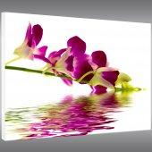 Quadro Forex fiore