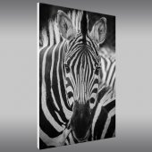 Quadro Forex zebra
