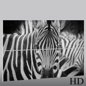 Quadro Triptico PVC zebra