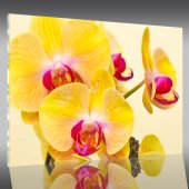 Tablou Plexiglas Orhidee
