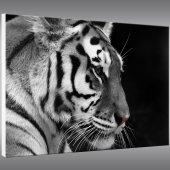 Tiger - Forex Print