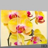 Triptyque Forex Orchidée