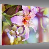 Forex Bild Blume