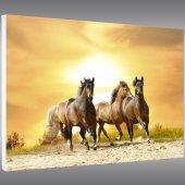 Quadro PVC Forex cavalos