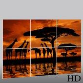 Africa - Triptych Forex Print