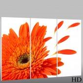 Flower - Triptych Forex Print