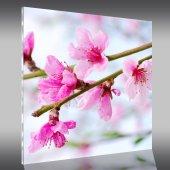 Flowers - Acrylic Prints