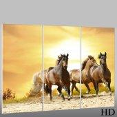Quadro Triptico PVC cavalos