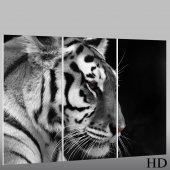 Tiger - Triptych Forex Print