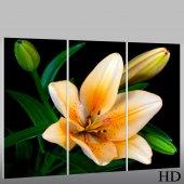 Trittico Forex fiore