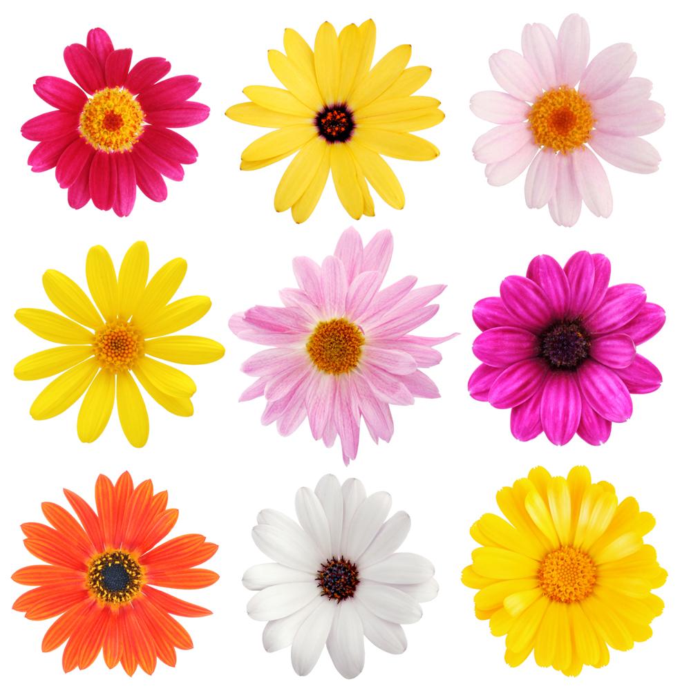 kit 9 stickers fleur pas cher. Black Bedroom Furniture Sets. Home Design Ideas