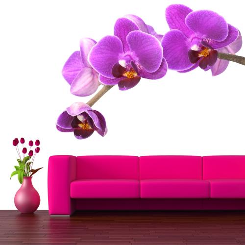 Stickers orchid e pas cher for Offrir des fleurs par internet pas cher