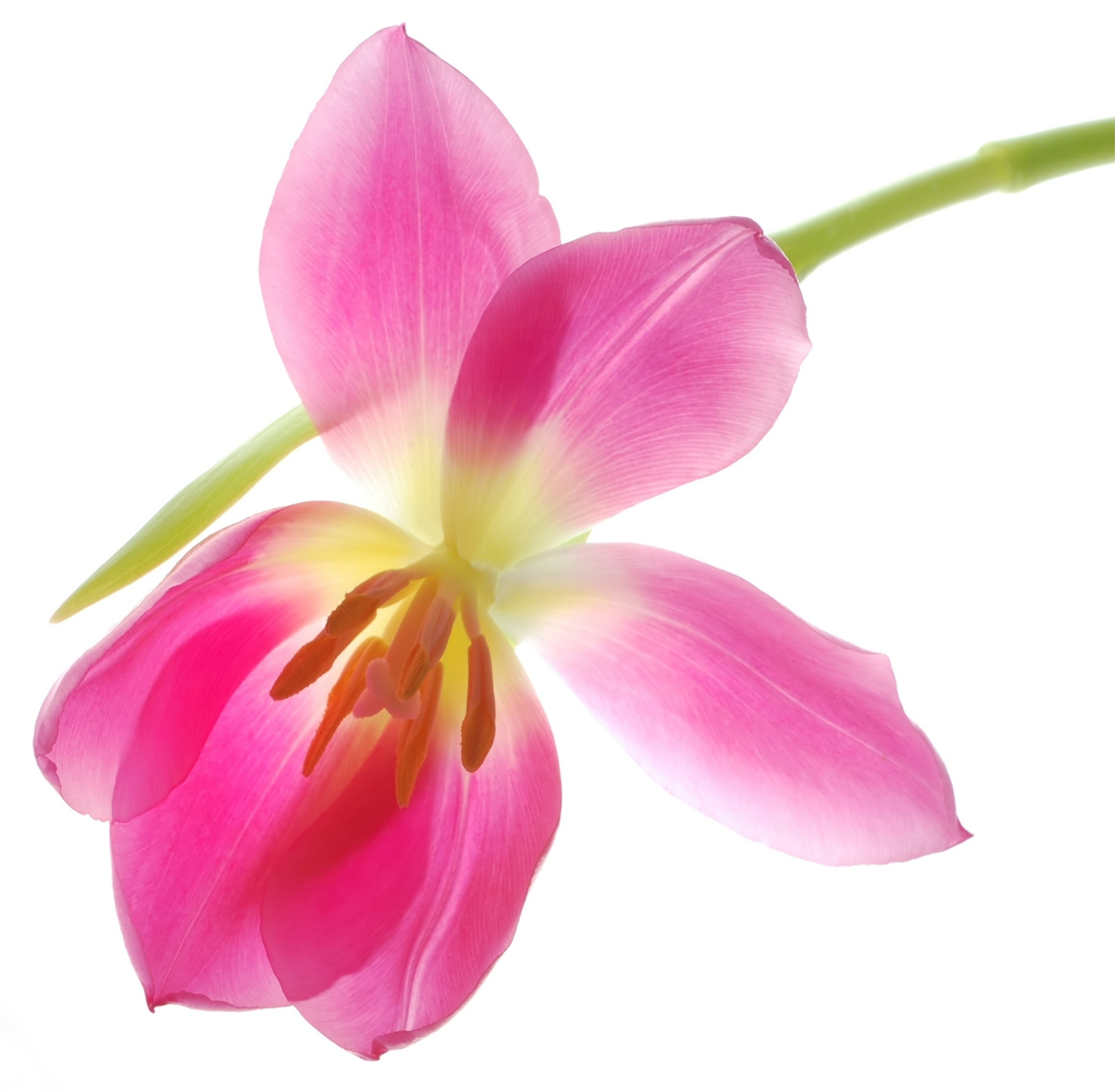 Stickers fleur pas cher for Fleur a repiquer pas cher