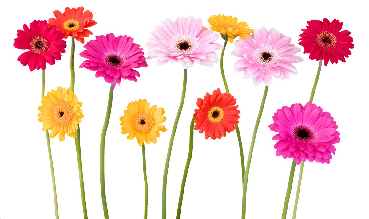 Stickers fleur pas cher for Fleurs a livrer a domicile pas cher