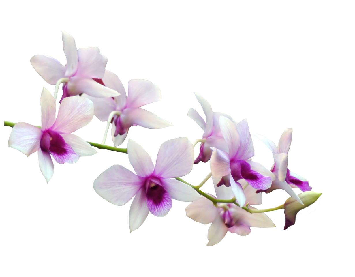 Stickers orchid e pas cher for Bouquet de fleurs zen
