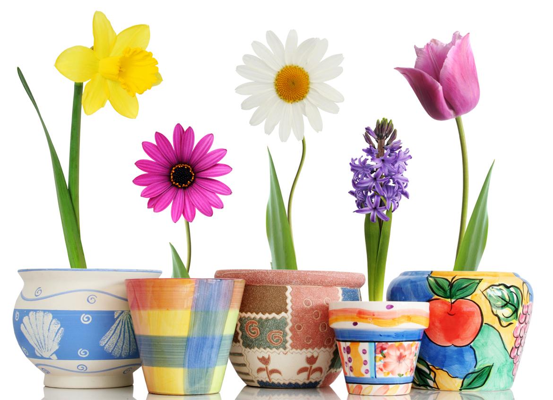 Stickers pots de fleur pas cher - A fleur de pot rennes ...