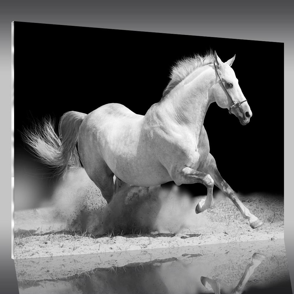 Tableau plexi cheval pas cher - Tableau photo plexi ...