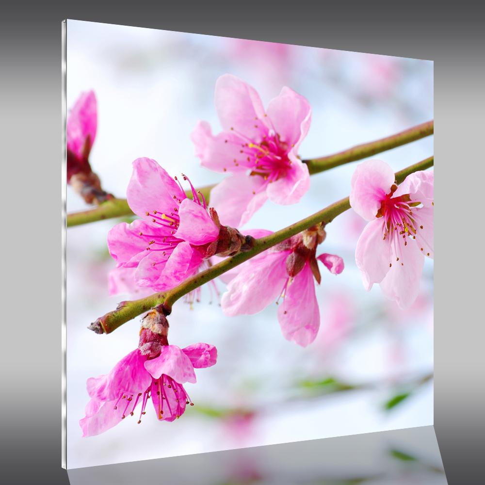 Tableau plexi fleurs pas cher for Fleurs a livrer a domicile pas cher