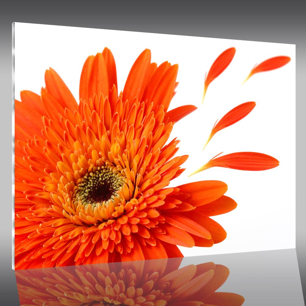 Tableau plexi flower pas cher for Tableau plexi pas cher