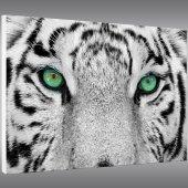Quadro Forex Tigre
