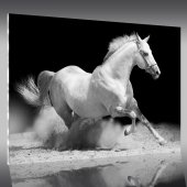 Acrylglasbild Pferde