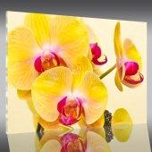 Cuadro metacrilato orquídea