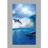 Dolphins Wall Posters