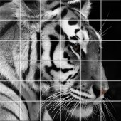 Fliesenaufkleber Tiger