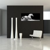 Horse - Forex Print