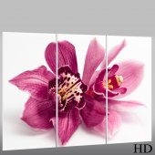 Orchid - Triptych Forex Print
