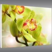 Quadro Forex orchidea