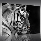 Quadro Plexiglass Tigre