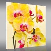 Quadro PVC Forex orquídea