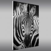 Quadro PVC Forex zebra