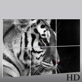 Quadro Triptico PVC Tigre